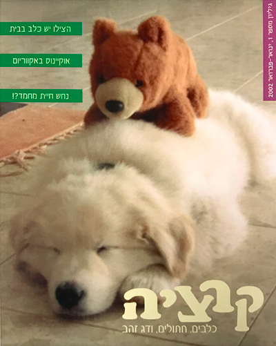 שמנדי על שער עיצוב מגזין